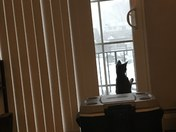 Curious kitten enjoying snow day