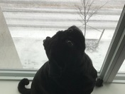 Vito watching the plows