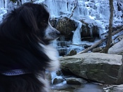 "Took a hike today with my dog ""Izzie"" to the yellow branch falls today."