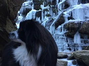 """Took a hike today with my dog """"Izzie"""" to the yellow branch falls today."""