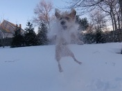 The cold doesn't bother the abominable snow dog Smudge