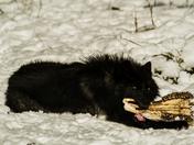 It's My Moose Jaw Bone!