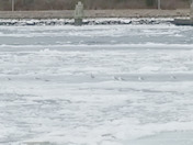 Seagulls catching a ride through the Cape Cod Canal