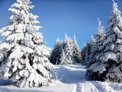 Snowmobiling and it's beauty!!!!