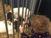 Lilly and the baby goats