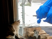 Our Cat Visiting with the Squirrel