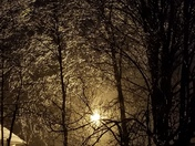 Icy trees glowing in street light. Shannon Crestwood, ky