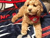 Pats dog photo