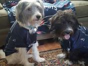 Patriots dogs