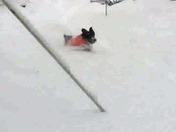 Slow-mo fun in the snow with Waylon