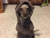 Toy Poodle, rescued 3 years ago. She extremely lovable and smart