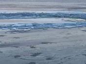 Susquehanna River Ice Break