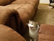 Hear me Roar !!!