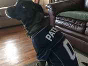 Daphne the Patriots Biggest Puppy fan!
