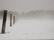 Foggy on the Farm
