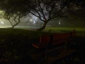 Tule fog at Ashton Park in Sacramento
