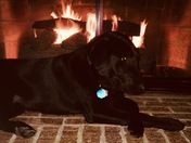 Mollie is keeping warm by the fire