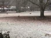 Snow Greenwood SC