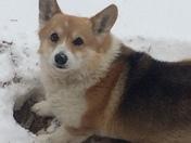 Sadie enjoying the snow