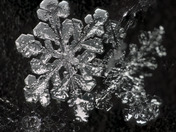 Images of snowcrystals from winter storm 17Jan 2018