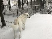 Snow dog Mia