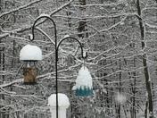 Bird feeder in Litchfield