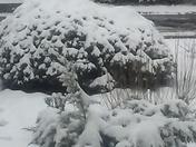Winter wonderland in Taylors