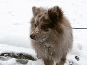 Greer Snow