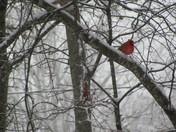 Snow in Simpsonville!