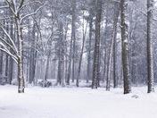 Snow Day 1/17/18