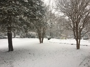 Early morning snowfall in the Taylors area