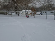 Bailee out playing in the snow!