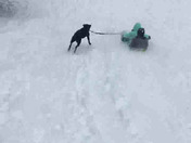 Sled Dog! 😂 2 happy kids, one happy dog! Rescued and adopted dog too!