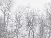 Snow in Reedy Creek (Hampton Road)