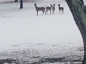 The deer photo was courtesy of my Friend Charley Richey in Anderson SC