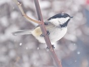 Braving Winter Storm Inga