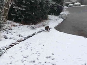 Two boxers react to the snow