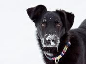 Puppy Snow Day