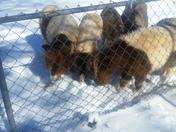 4 legged friends in snow