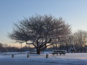 Post snow morning