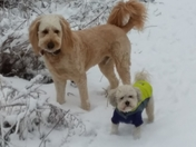 Whiskey and Oliver enjoyed our snow covered trail!
