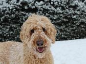 Rasta's snow day!