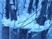 Snow frozen between trees
