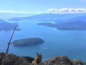 Chipmunk With a View