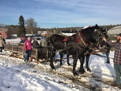 Beautiful Day for a sleigh ride
