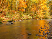 Autumn along the river