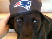 Bella Kemp loves the Pats!