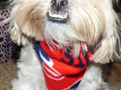 Moochie has something to smile about, the Patriots are going to the Superbowl!!!