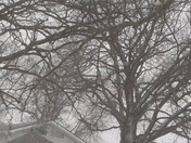 Snow Storm in Unadilla Nebraska 1/22/18