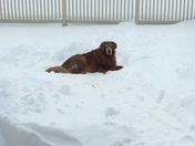 Somebody at least loves the snow